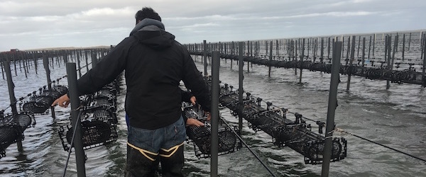 Oyster farmers from Mexico